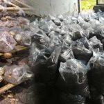 mantar kompostları