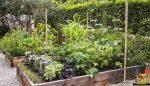 Mantar kompostu atığının sebze yetiştiriciliğinde Kullanımı