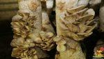 Kompostlaşmaya etki eden faktörler