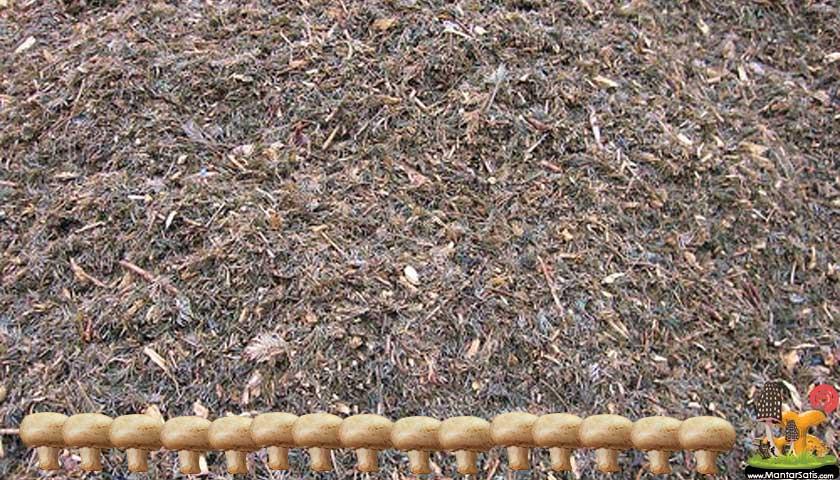 mantar kompost gübresi