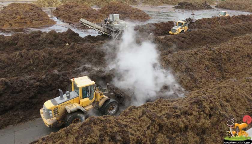 mantar kompost işleme