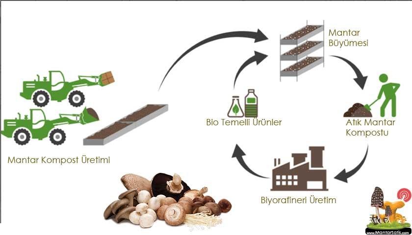 mantar kompost üretimler