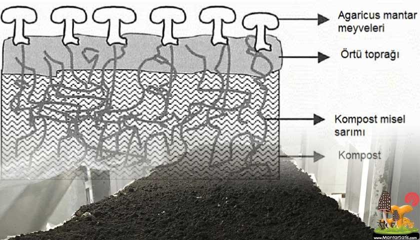 mantar örtü toprağı