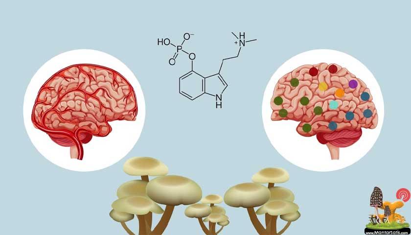 mantar ve beyin etkis